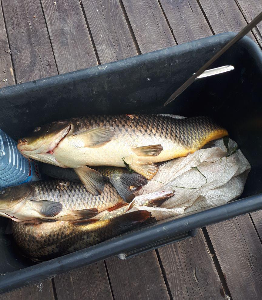 Рыбалка на сазана, апрель 2021