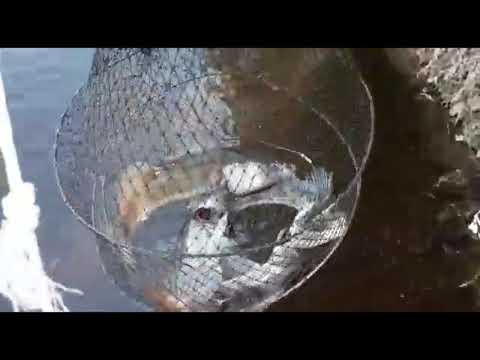 Рыбалка на пруду на острове, июнь 2020