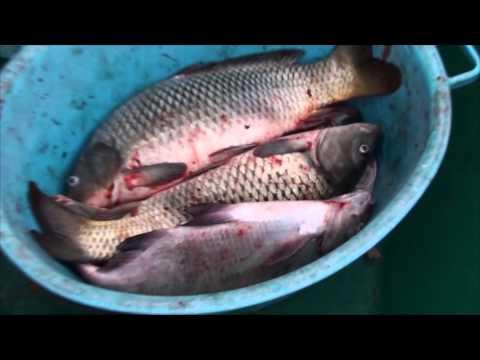 Видеоотчет о рыбалке на о.Колочном